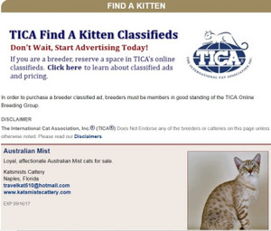 Find_a_kitten